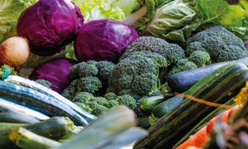 Conociendo la hortaliza