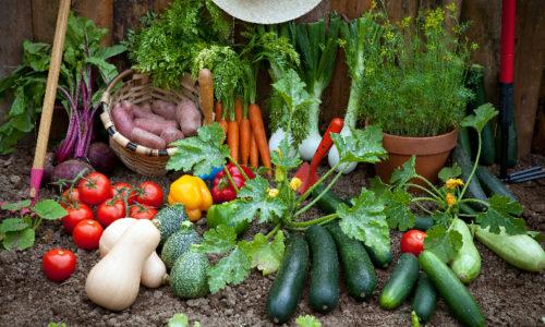 Mi jardín comestible